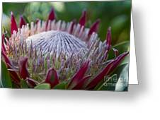 King Protea Island Flowers Jewel Of The Garden Greeting Card