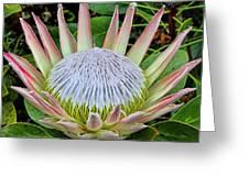 King Protea Greeting Card