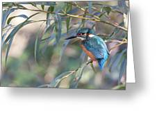 Kingfisher In Willow Greeting Card