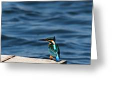 Kingfisher On The Dock Greeting Card