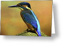 Kingfisher Perch Greeting Card