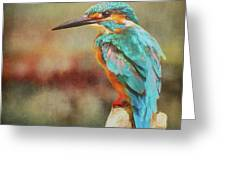 Kingfisher's Perch Greeting Card