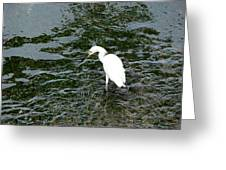 Kingston Jamaica Egret Greeting Card