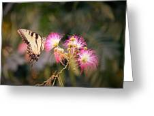 Kiss Of Butterfly Greeting Card
