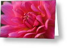 Kiss Of Pink Greeting Card