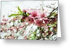 Kiss Of Spring Greeting Card