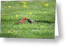 Kissing Cardinals Greeting Card