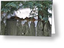 Kissing On A Fence Greeting Card