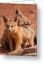 Kit Fox Mother Looking Over Pup Greeting Card