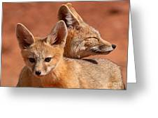 Kit Fox Pup Snuggling With Mother Greeting Card