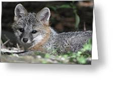 Kit Fox1 Greeting Card