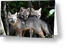 Kit Fox10 Greeting Card