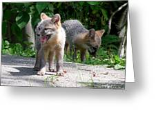 Kit Fox12 Greeting Card