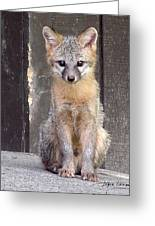 Kit Fox15 Greeting Card