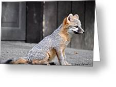 Kit Fox2 Greeting Card