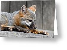 Kit Fox3 Greeting Card