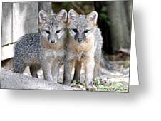 Kit Fox6 Greeting Card