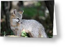 Kit Fox7 Greeting Card