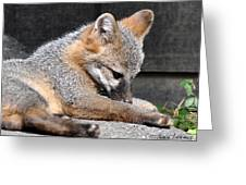 Kit Fox8 Greeting Card