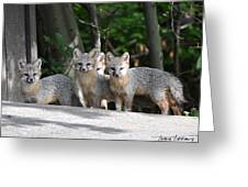 Kit Fox9 Greeting Card