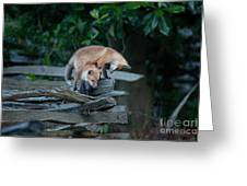 Kit Foxes Greeting Card