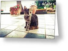 Kitcat Greeting Card