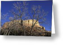 Kitchen Mesa And Bare Cottonwood Trees Greeting Card