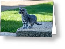 Kitten 1 Greeting Card