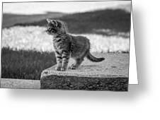 Kitten 2 Greeting Card
