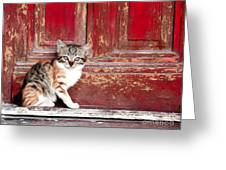Kitten By Red Door Greeting Card