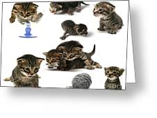 Kitten Collage Greeting Card