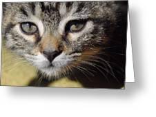 Kitten Curiosity Greeting Card