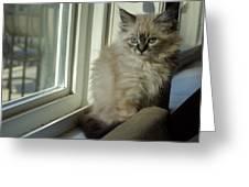 Kitten Daydreams Greeting Card