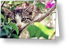 Kitten Hiding Out Greeting Card