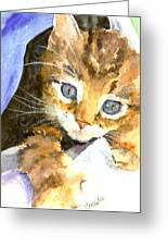 Kitten In Blue Greeting Card