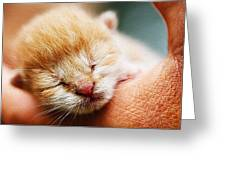 Kitten In Hand Greeting Card