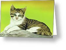 Kitten On Rock Greeting Card