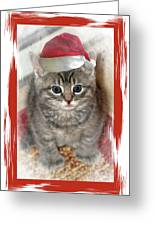 Kitten Playing Santa  Greeting Card