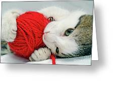 Kitten Playing With Red Ball Of Yarn Greeting Card