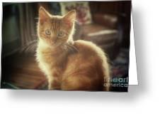 Kitten Portrait Greeting Card