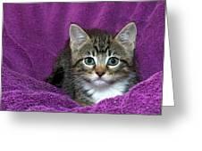 Kitten, Purr-fect In Purple Greeting Card