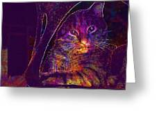 Kitten Red Cat Cat Tom Cat Pets  Greeting Card