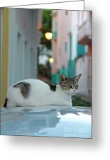 Kitten Reflections Greeting Card