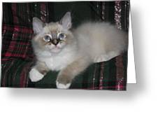Kitten Silky Snow Lynx With Boots Greeting Card
