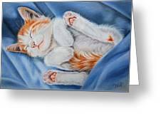 Kitten Sleeping Greeting Card
