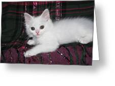 Kitten Snow White On Green And Pink Plaid Greeting Card