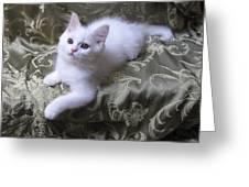 Kitten Snow White Silky Fur Greeting Card