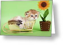 Kitten With Flover Greeting Card
