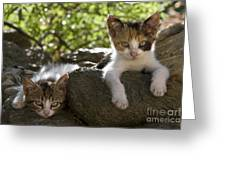 Kittens On A Wall Greeting Card