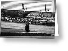 Kitty Across The Street Black And White Greeting Card